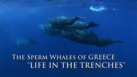 greek whales.jpg