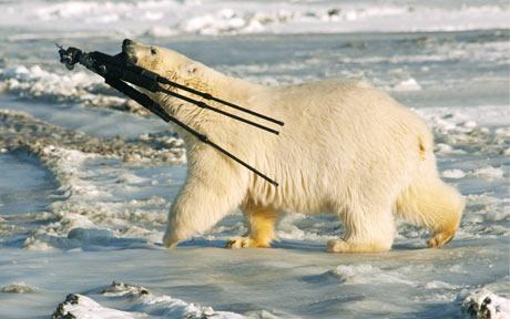 bear-tripod-460_1615644c.jpg